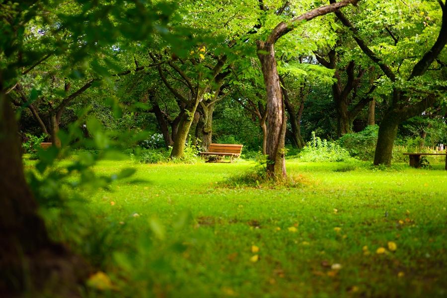 東京都 小石川植物園 歴史のある植物も