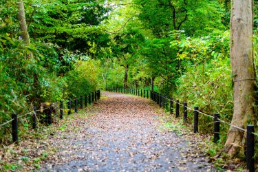 こんぶくろ池自然博物公園 千葉県